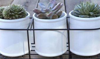JP Digs & Co Cactus Bar Succulent Giveaway